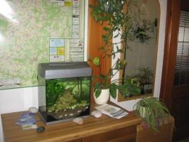 Unsere kleinsten Fische im Aquarium im Flur vor der Gastwirtschaft.Nicht nur für Kinder schön anzuschauen